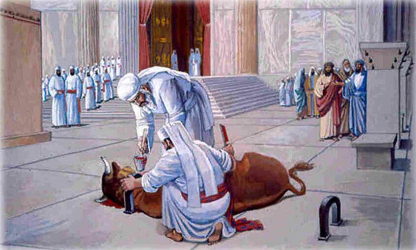 Забой жертвенного животного и слив крови.